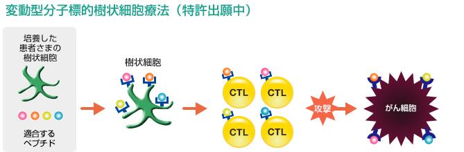 変動型分子標的樹状細胞療法の説明